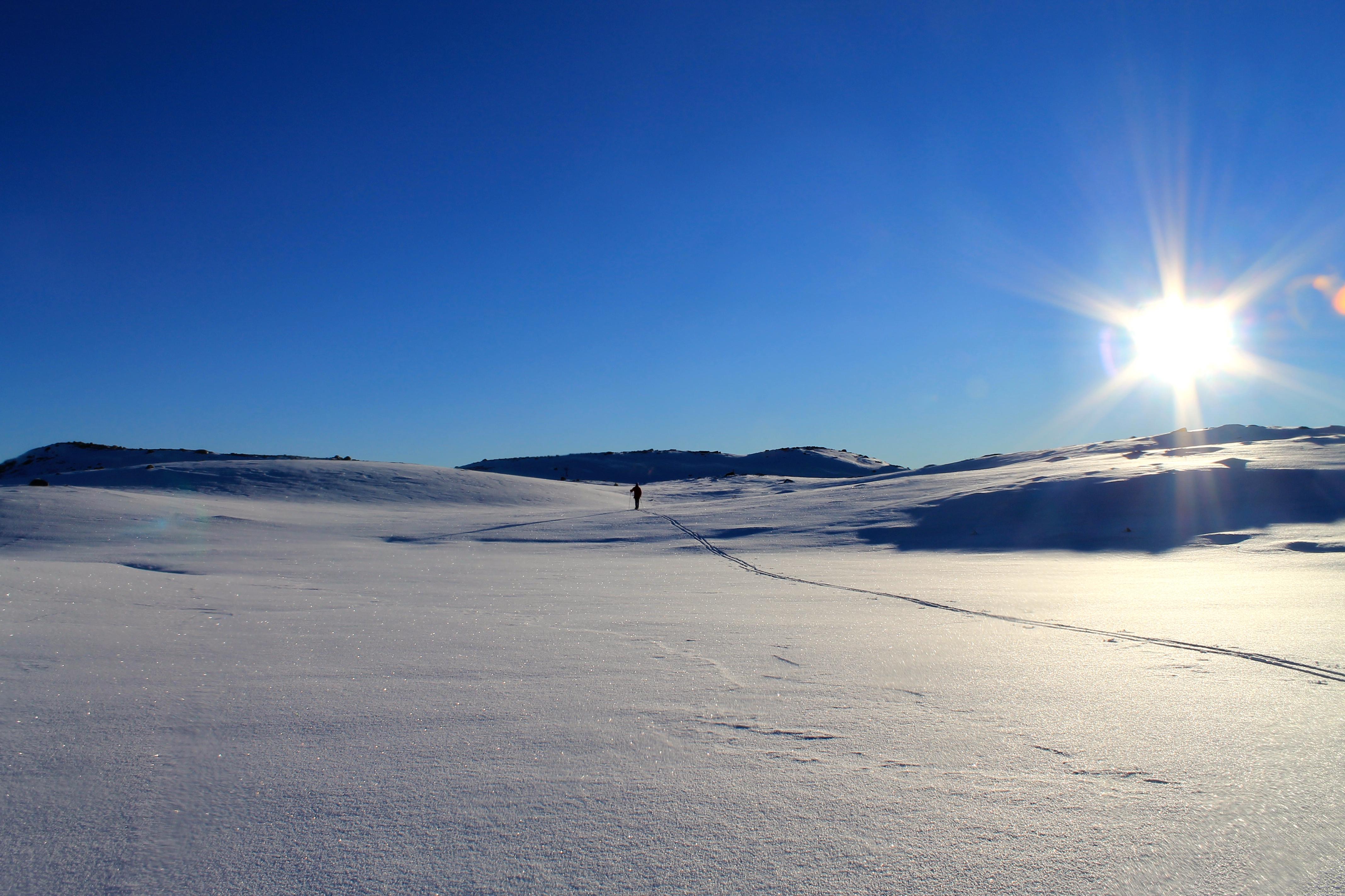 På ski mot Nevlingkollen over tregrensen.