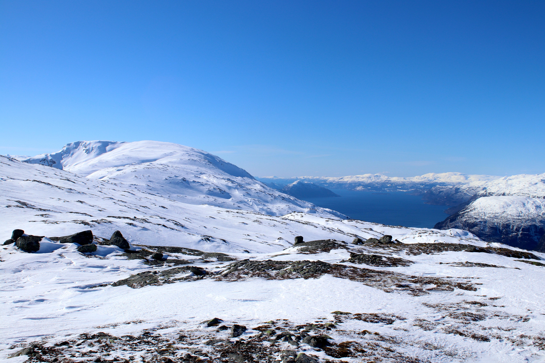 Oksen med Hardangerfjorden bak.