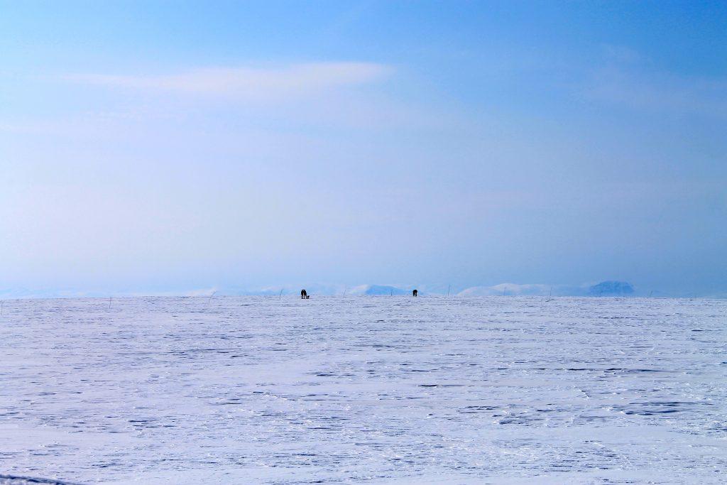 Det er kvistet løype over selve Hardangerjøkulen. Over breen er det nok så flatt.